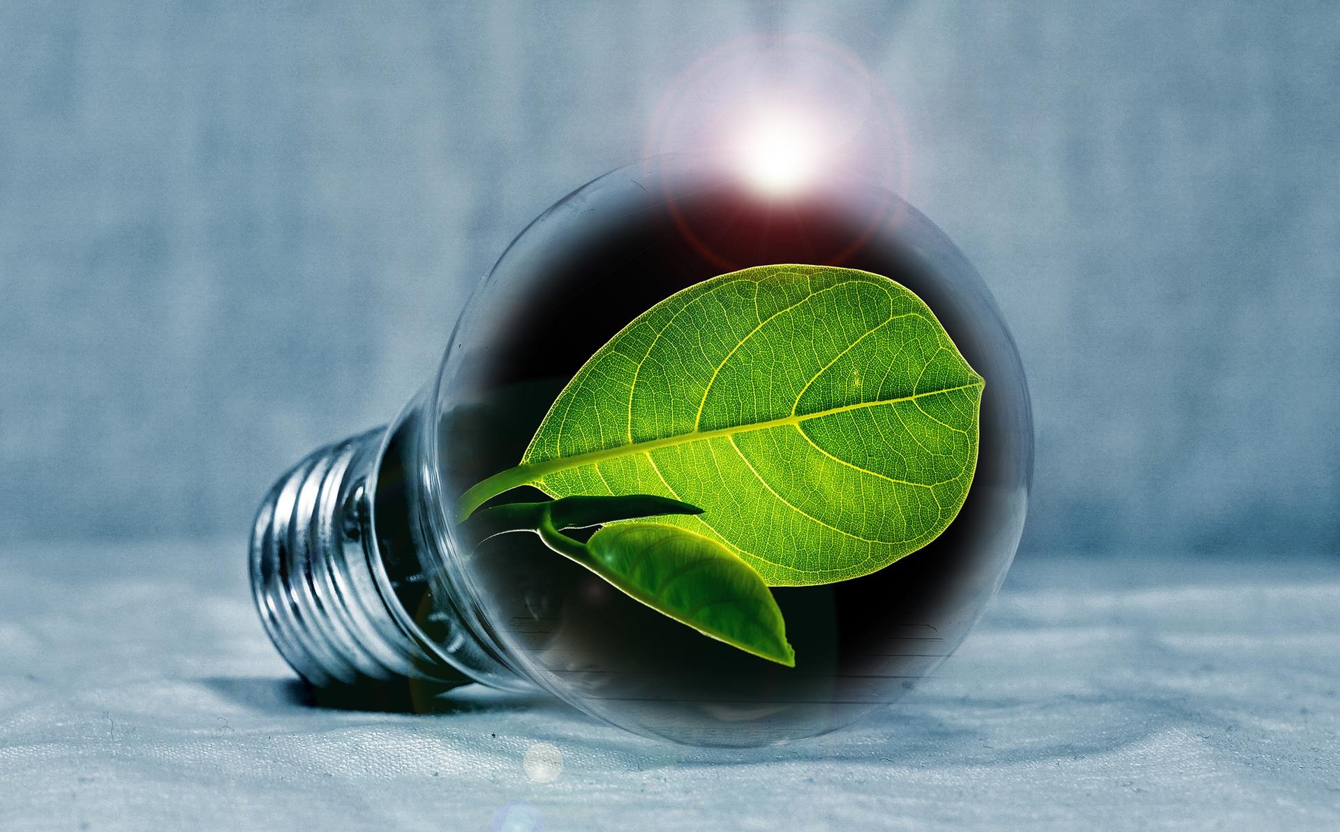 Introduction to Toward Zero Carbon
